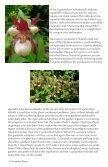 Perennial Plants - Cypripedium.de - Page 4