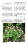 Perennial Plants - Cypripedium.de - Page 5