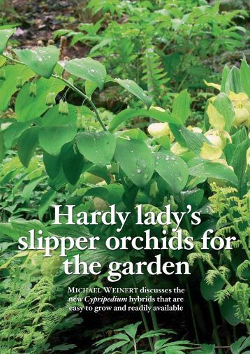 Hardy lady's slipper orchids for the garden (552kB)