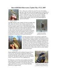 Beaverhill Bird Observatory Update May 15-21, 2009