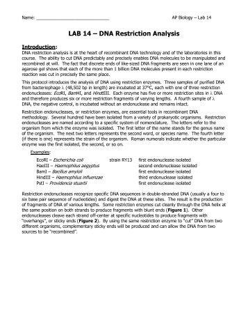 ap investigation lab 13 enzyme activity Ap investigation #13: interacts: enzyme activity- part 3 open inquiry jovanni cuevas, claudia dentico, claudia luto, shreya kolar, arianna oggioni.