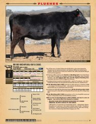 flushes - The Lone Mountain Cattle Company