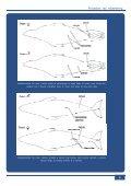 2006-07 - Fiskeri- og Søfartsmuseet - Page 7