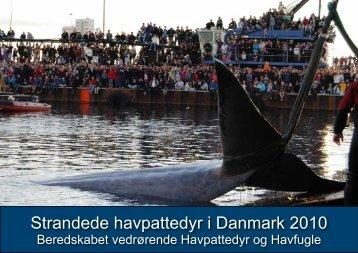 Strandede havpattedyr i Danmark 2010 - Fiskeri- og Søfartsmuseet