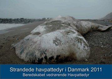 Strandede havpattedyr i Danmark 2011 - Fiskeri- og Søfartsmuseet