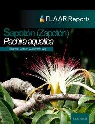 Pachira aquatica - Maya Ethnobotany
