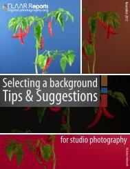 Selecting a background - Maya Ethnobotany