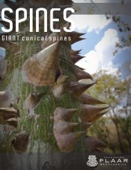 Ceiba Giant Conical Spines at Copan, 2012 - Maya Ethnobotany