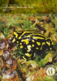 zoos victoria's 2o priority species northern corroboree frog