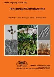 Phytopathogenic Dothideomycetes - CBS - KNAW