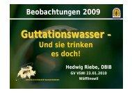 Guttationswasser – - Verein Schweizer Wanderimker