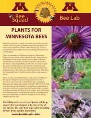 Plants for Minnesota Bees - NEW LIST - Bee Lab