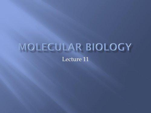 Molecular Biology lecture 11 - lectureug4