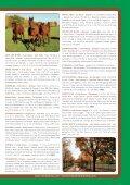 Broschyr Menhammar 2012 sep:Layout 1 - Menhammar Stuteri - Page 5