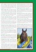 Broschyr Menhammar 2012 sep:Layout 1 - Menhammar Stuteri - Page 7