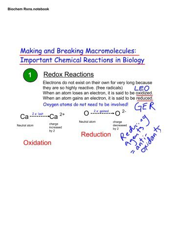 Mcat c biochemical reactions whssbiozone fandeluxe Image collections
