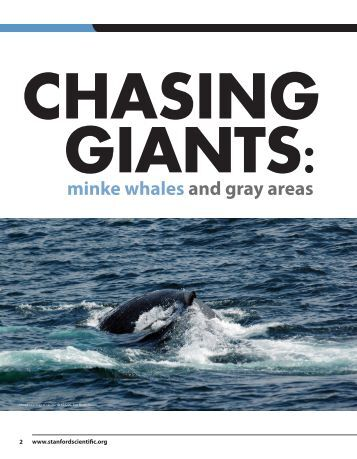 minke whales and gray areas - Liz Walter Shelly