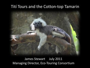 Titi Tours and the Cotton Top Tamrin - Travelers' Philanthropy