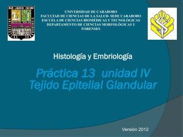 Práctica 13 unidad IV Tejido Epitelial Glandular - Universidad de ...