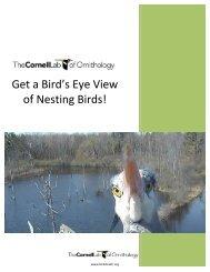 Nesting Birds Scramble - All About Birds