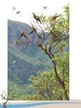 Plano de Ação para Prevenção e Controle do Desmatamento e das ... - Page 7
