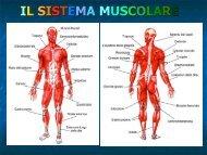 Ventre muscolare - G. Veronese