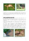 Leven na de dood, ook in het Zoniënwoud (1) - Dood Doet Leven - Page 3