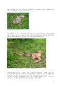 Leven na de dood, ook in het Zoniënwoud (1) - Dood Doet Leven - Page 7