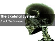 The Skeletal System - Science with Mr. Enns