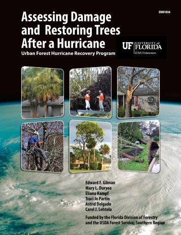 Assessing Damage and Restoring Trees After a Hurricane
