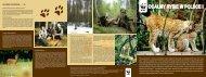 ocalmy rysie w polsce - WWF