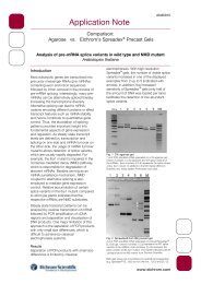 Analysis of pre-mRNA splice variant in wild type and NMD mutant ...