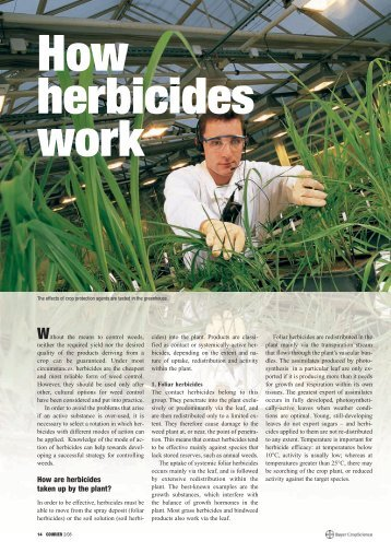 Download: (570 KB pdf) - Bayer CropScience Mexico