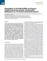 Degradation of Host MicroRNAs by Poxvirus Poly(A) Polymerase ...