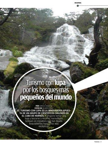 Turismo con lupa por los bosques más pequeños del ... - Travesías