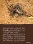 A flexibilidade sexual das fêmeas - Revista Pesquisa FAPESP - Page 2