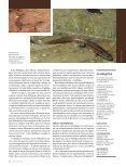 A flexibilidade sexual das fêmeas - Revista Pesquisa FAPESP - Page 3