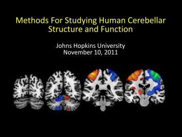 Methods For Studying Human Cerebellar Structure ... - Neurometrika