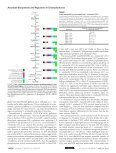 Impact of Oxidative Stress on Ascorbate Biosynthesis in - Page 6