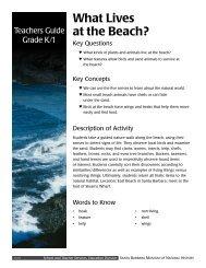 What Lives at the Beach? - Santa Barbara Museum of Natural History