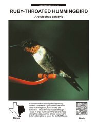 RUBY-THROATED HUMMINGBIRD - The State of Water