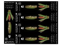Wanted: Emerald Ash Borer and Look Alikes bookmarks