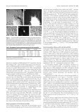 Functional Properties of Motoneurons Derived from Mouse ... - Page 4