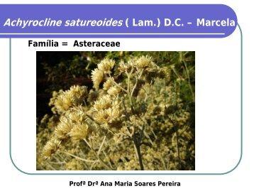 Achyrocline satureoides ( Lam.) D.C. – Marcela - Cerrado in vitro