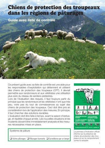Chiens de protection des troupeaux dans les régions de pâturages