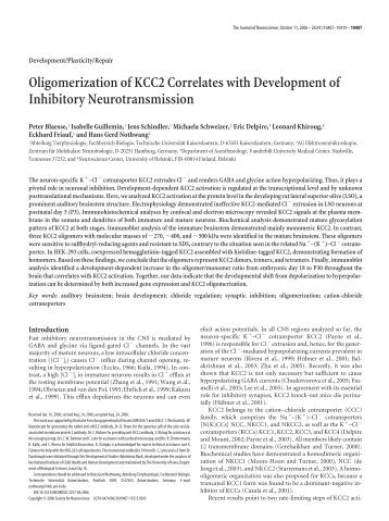 Oligomerization of KCC2 Correlates with Development of Inhibitory ...