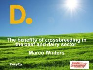 The benefits of cross breeding in the beef and dairy sector - Marco ...