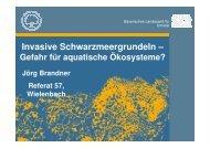 Vortrag Herr Brandner