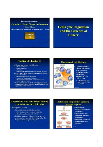 Cell-Cycle Regulation and the Genetics of Cancer