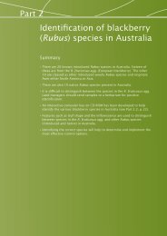 Part 2: Identification of blackberry (Rubus) species - Weeds Australia